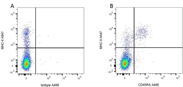 MHC Class II H-2I-Ak/s Antibody | OX-6 gallery image 18