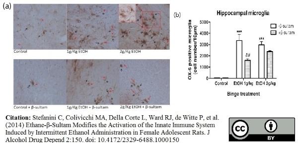 MHC Class II H-2I-Ak/s Antibody | OX-6 gallery image 10