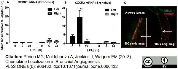 RECA-1 Antibody | HIS52 gallery image 5
