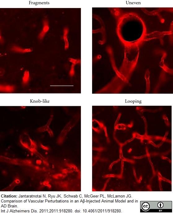 RECA-1 Antibody | HIS52 thumbnail image 15