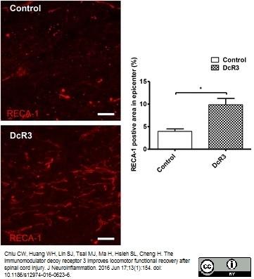RECA-1 Antibody | HIS52 thumbnail image 20