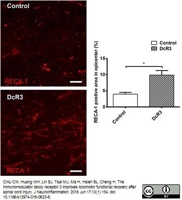 RECA-1 Antibody | HIS52 gallery image 20