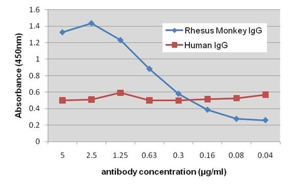 IgG Antibody | 8717 gallery image 1