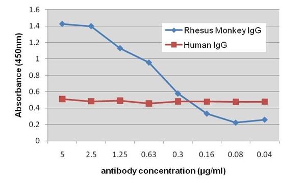 IgG Antibody | 8718 gallery image 1