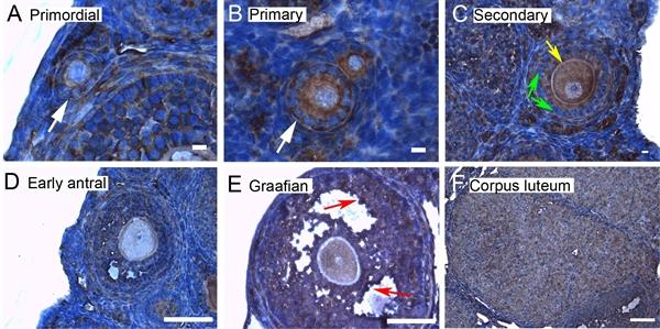 14-3-3 Epsilon Antibody gallery image 5