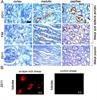 CD230 (Prpsc) Antibody | 2G11 thumbnail image 3
