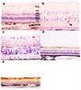 CD230 (Prpsc) Antibody | 2G11 thumbnail image 4