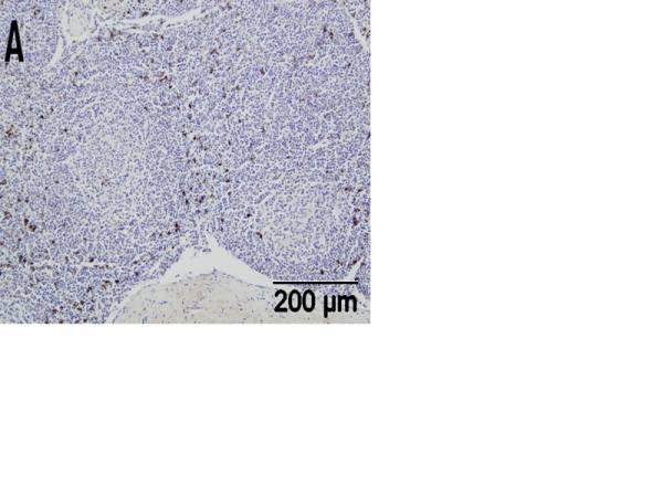 CD335 Antibody | EC1.1 gallery image 1