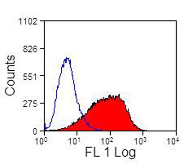 CD335 Antibody | EC1.1 gallery image 3