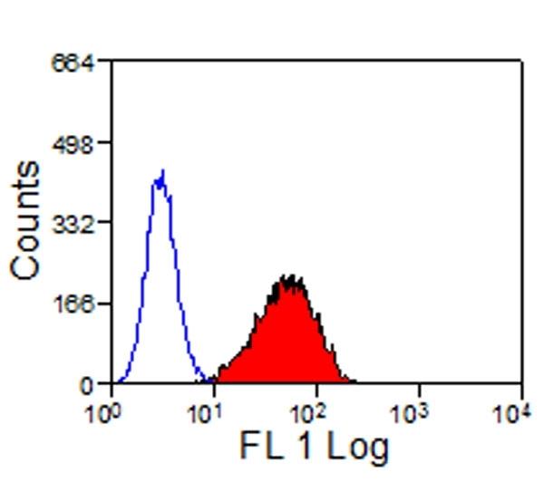 CD335 Antibody | EC1.1 gallery image 4