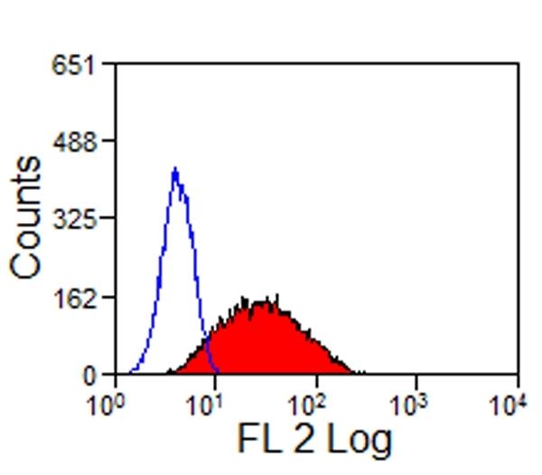 CD335 Antibody | EC1.1 gallery image 5
