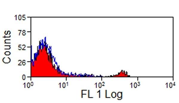 CD8 Antibody | 38.65 gallery image 1