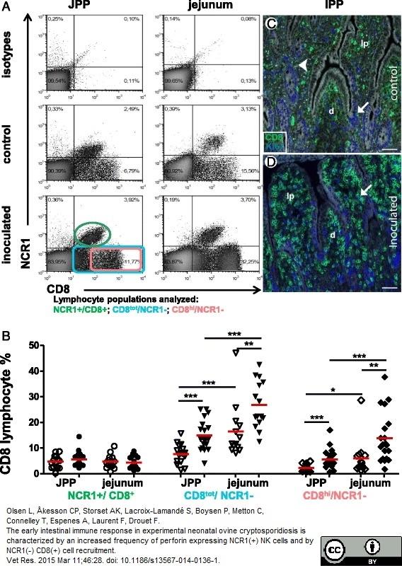CD8 Antibody | 38.65 gallery image 4