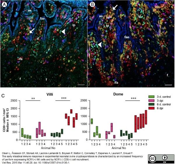 CD8 Antibody | 38.65 gallery image 5