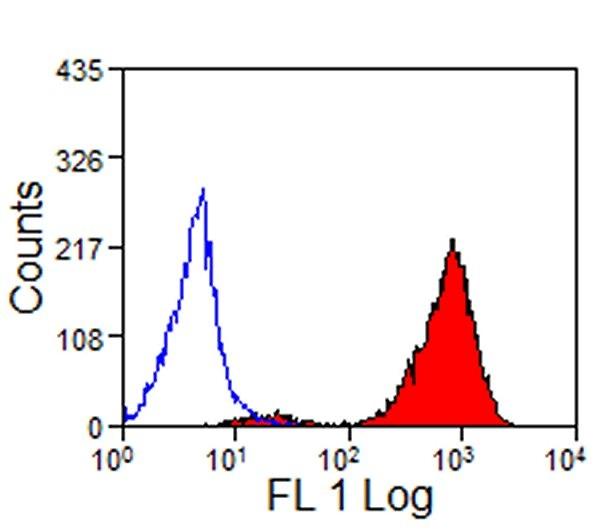 MHC Class I Antibody   VPM19 gallery image 1