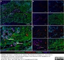 MHC Class II DQ DR Polymorphic Antibody   49.1 thumbnail image 4