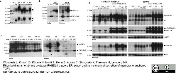 Prolactin Antibody gallery image 2