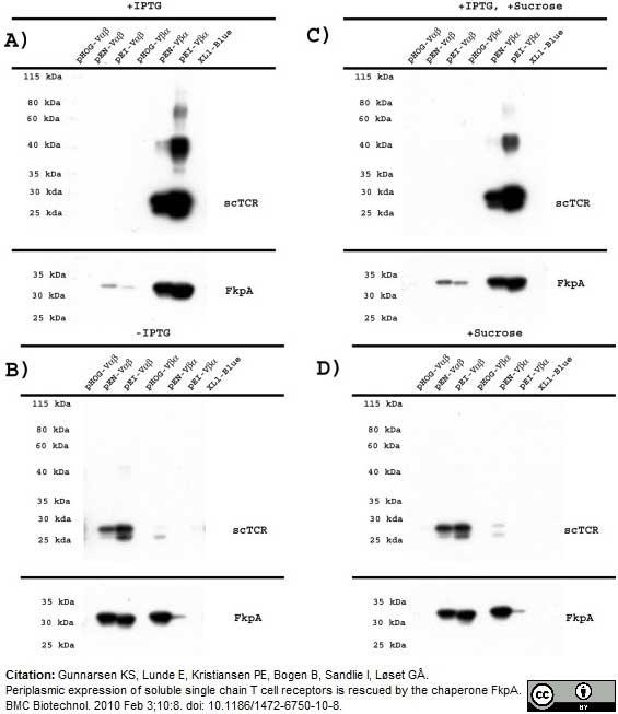 Histidine Tag Antibody | AD1.1.10 gallery image 6