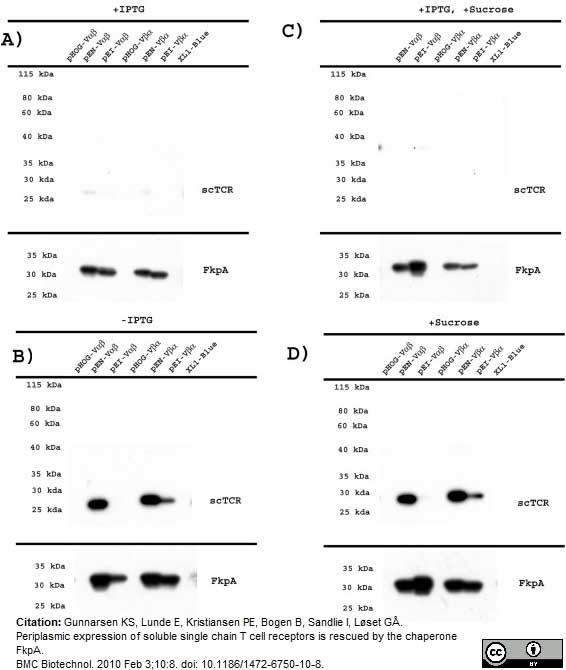 Histidine Tag Antibody | AD1.1.10 gallery image 7