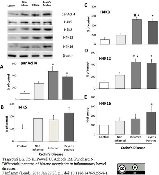 Histone H4 Ac5 Antibody gallery image 3