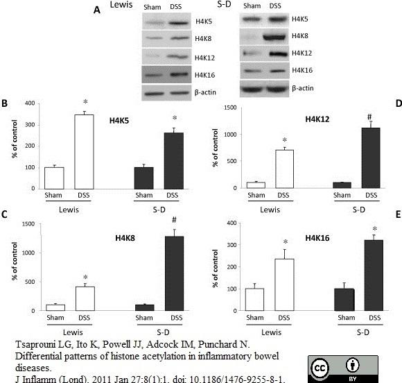 Histone H4 Ac5 Antibody gallery image 2