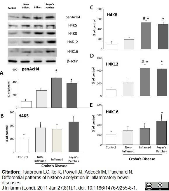 Histone H4 Ac8 Antibody gallery image 4