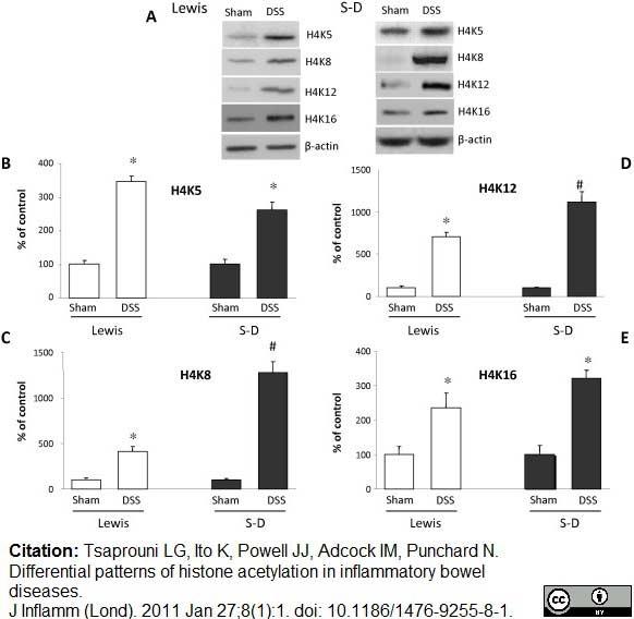 Histone H4 Ac8 Antibody gallery image 3