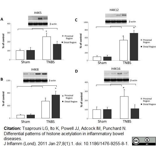 Histone H4 Ac8 Antibody gallery image 2