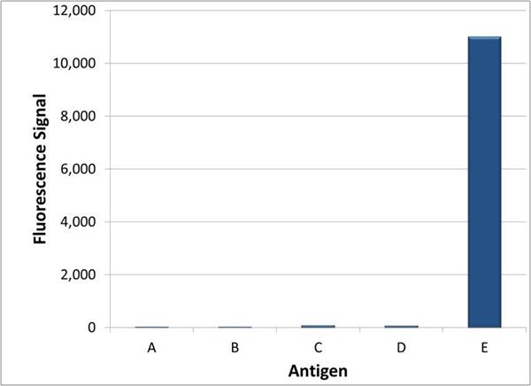 Trastuzumab Antibody | AbD18141 gallery image 3