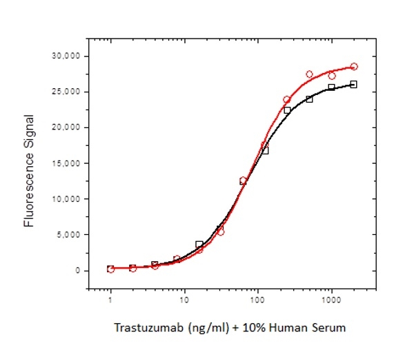 Trastuzumab Antibody | AbD18018_hIgG1 gallery image 3