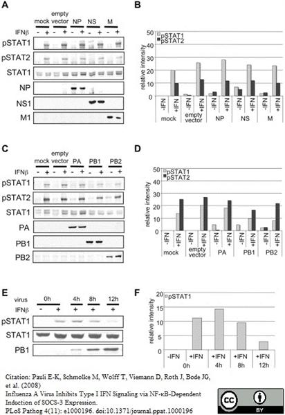 Influenza A Matrix Protein Antibody | GA2B gallery image 7