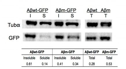 Tubulin Alpha Antibody | YOL1/34 gallery image 10