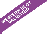 Western Blot Validated