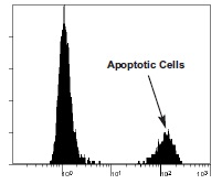 Fig 4. Flow cytometry data of APO-BRDUTM showing the log green fluorescence of positive control cells